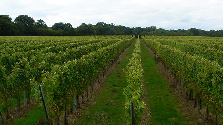 Gusbourne Estate is located on an ancient Kentish escarpment at Appledore.